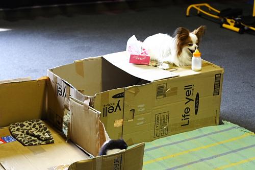 sakura手作りのネコハウスなのだーーー。なんでサリー乗ってるのーーー?