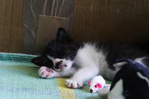 ダンボールの外でもスヤスヤ眠ってる
