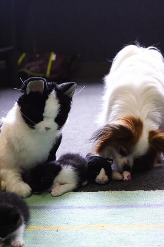 猫のオモチャを取るなーーーっ!