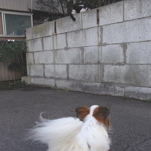 散歩の途中で・・・