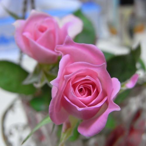 秋に咲いたバラ