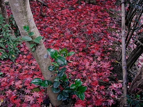 今朝は落ち葉が濡れていた