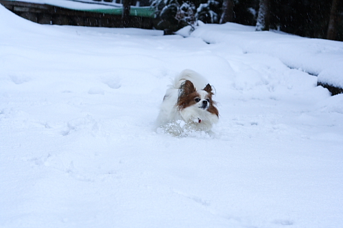 朝起きたら雪が積もってた