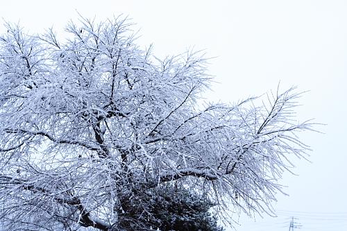 この前の雪の日・・・今日はちょこっと雪降ったみたいだけど、今は道路にも雪はありません