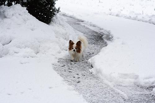 ここを全部除雪してーーー