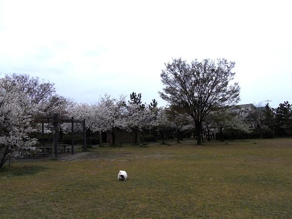 こ~んなに広い公園