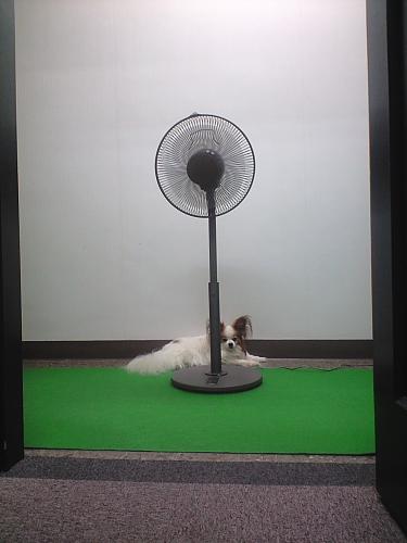 扇風機のそっちは風があたらないよーーー