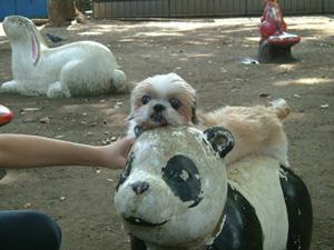 パンダに乗ったよ。