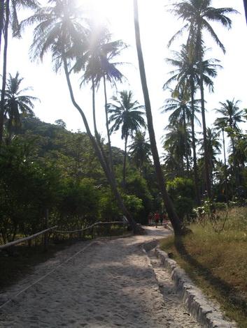 サムイ島の天気 朝の散歩