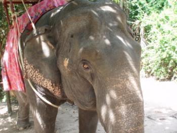 サムイ島天気baby elephant