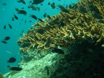 サムイ島の天気 タオ島ダイビング ポッタリー