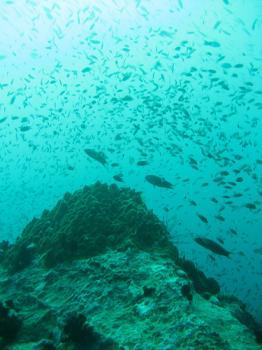 サムイ島の天気 ホワイトロック