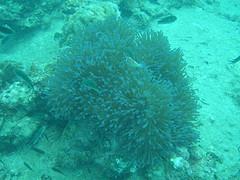 サムイ島の天気 ナンユアン島ダイビング