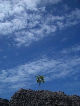 サムイ島の天気29aug
