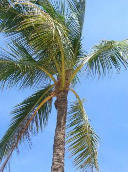 サムイ島の天気 4aug
