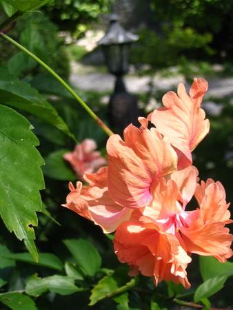 サムイ島の天気 3月13日