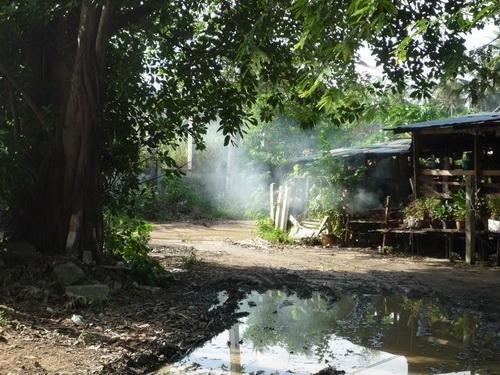 サムイ島の天気 裏庭