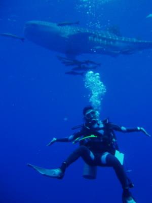 サムイ島の天気 WHALE SHARK②