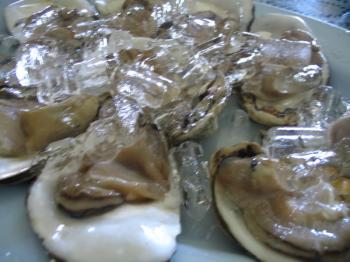 サムイ島の天気 生牡蠣
