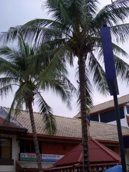 サムイ島の天気14sep
