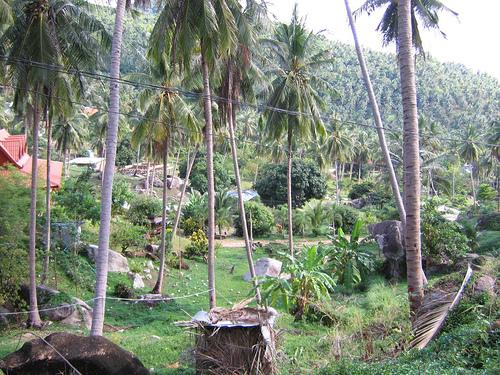 サムイ島の天気 道…