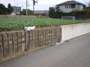 三浦桜まつり10-02