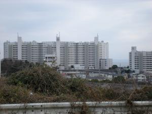 三浦桜まつり10-04