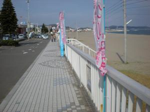 三浦桜まつり10-05