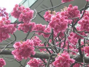 イタチ川3月15日
