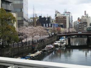 横浜大岡川桜まつり