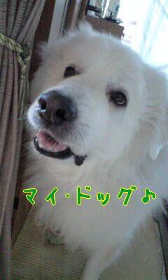 mydog.jpg
