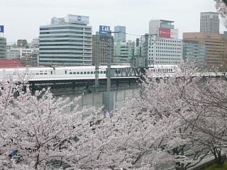 中央公園(桜4)
