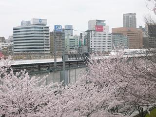 中央公園(桜5)