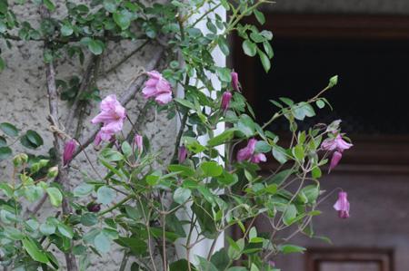 aljonushika2009518-1.jpg