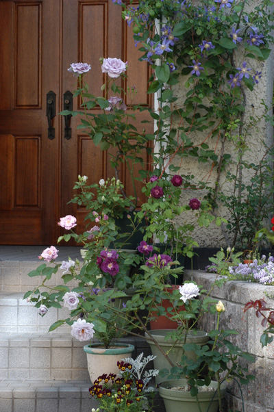 blueroses2009511-3.jpg