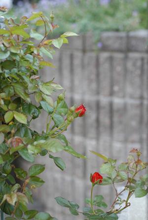 colorbreak2009525-1.jpg