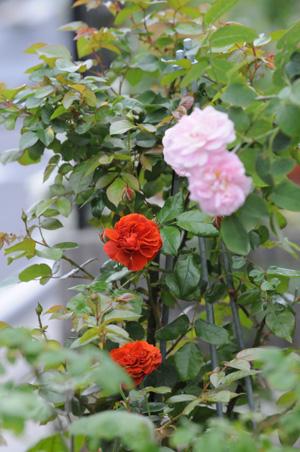 colorbreak2009527-1.jpg