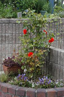 colorbreak2009531-1.jpg