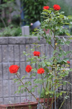 colorbreak2009614-1.jpg
