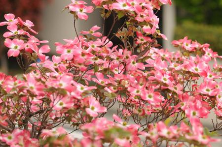 hanamizukired2009416-7.jpg