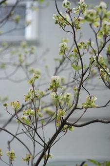 hanamizukiwhite2009416-1.jpg