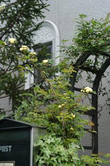 kimokkou2009420-1.jpg