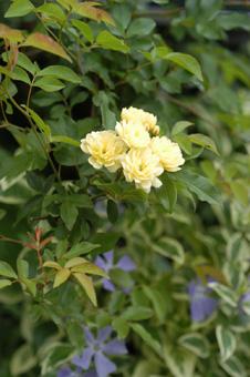 kimokkou2009420-3.jpg