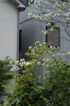 kimokkou2009420-4.jpg