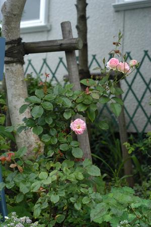 matilda2009621.jpg