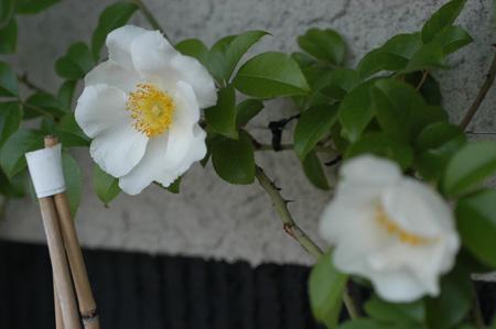 naniwa2009430-4.jpg