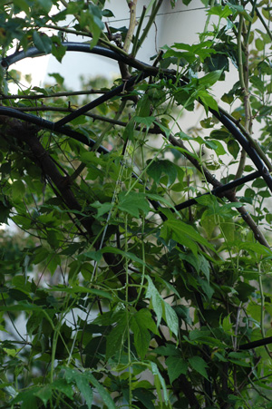 okisuzu2008824-1.jpg
