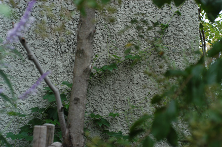 okisuzu2008929-3.jpg