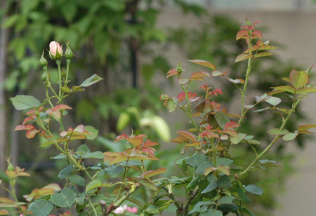 peachb2009712-1.jpg