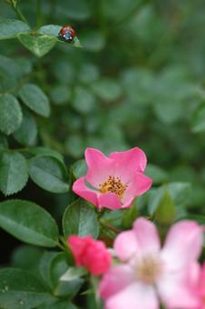 pinkcover2009517-1a.jpg